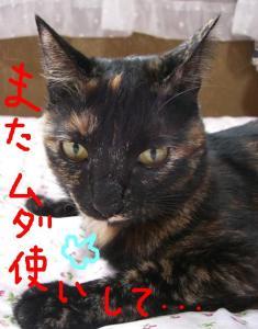 CIMG4683.jpg