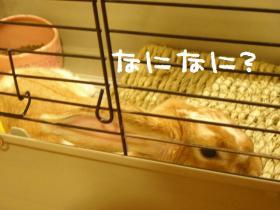 KICX0864s.jpg