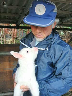 ヤギの赤ちゃん