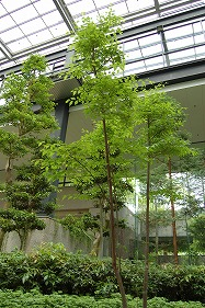 緑化センター2エゴノキ