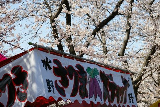 五条川桜2011-5