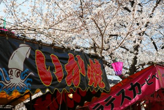 五条川桜2011-4