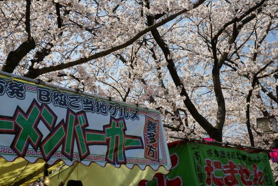五条川桜2011-3