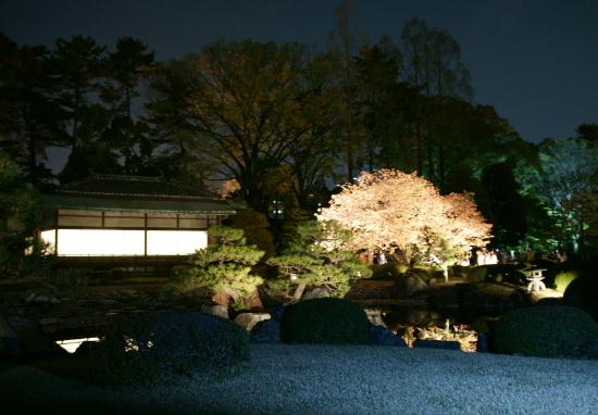 京都桜2009-3