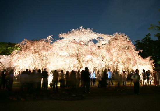 京都桜2009-4