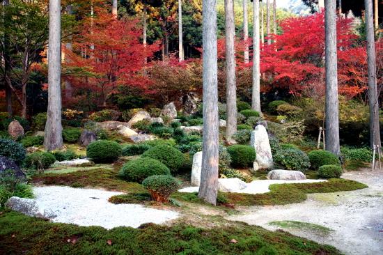 京都紅葉2008-9