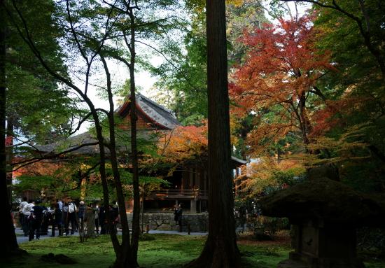 京都紅葉2008-8