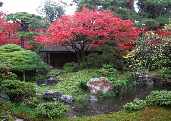 京都紅葉2008-6