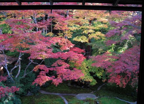 京都紅葉2008-14
