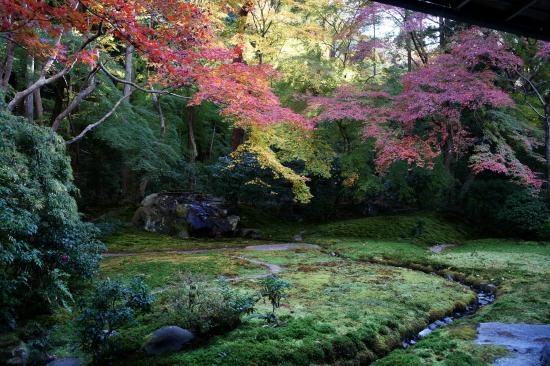 京都紅葉2008-13