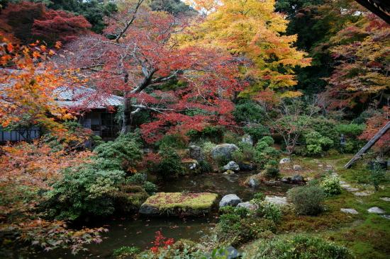 京都紅葉2008-11