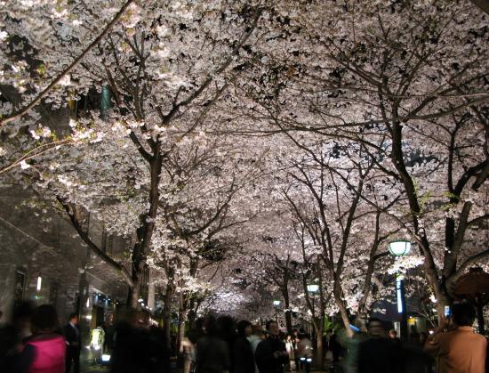 京都桜2008-7