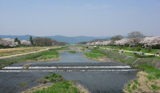 京都桜2008-3