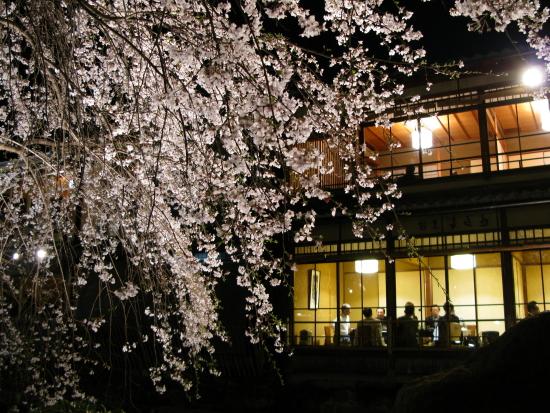 京都桜2008-02