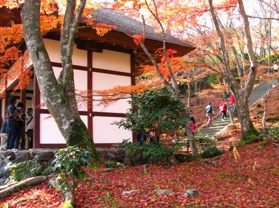 京都紅葉2007-2