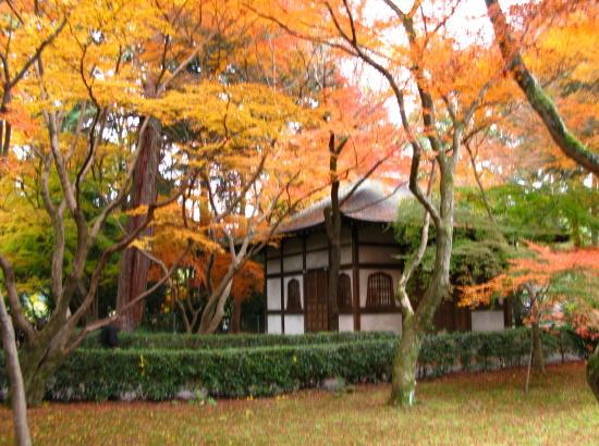 京都紅葉2007-1