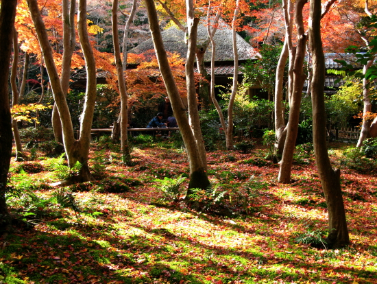 京都紅葉2007-5
