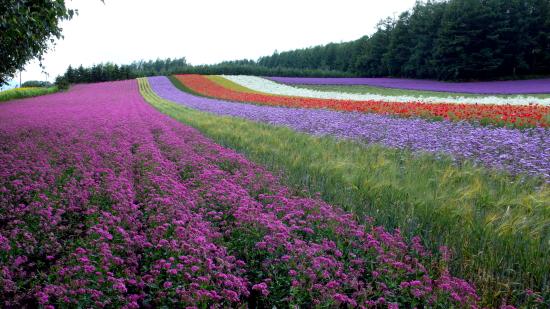 北海道夏2007-3