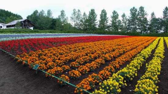 北海道夏2007-4 (2)
