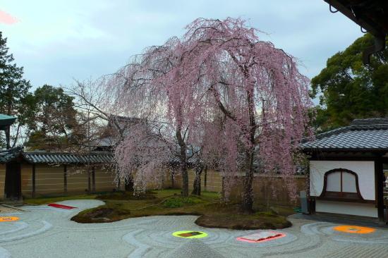 京都桜2007-5