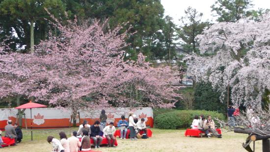 京都桜2007-3