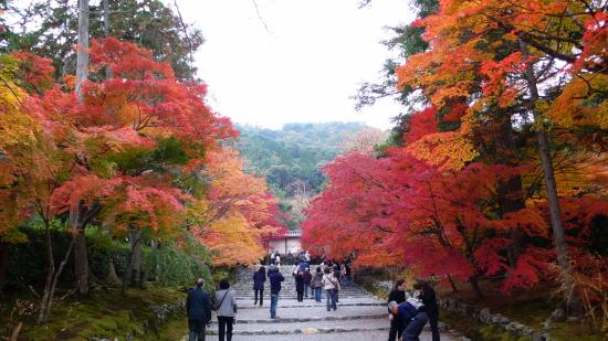 京都紅葉2006-5