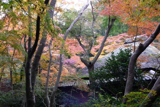 京都紅葉2006-3