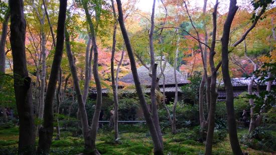 京都紅葉2006-2