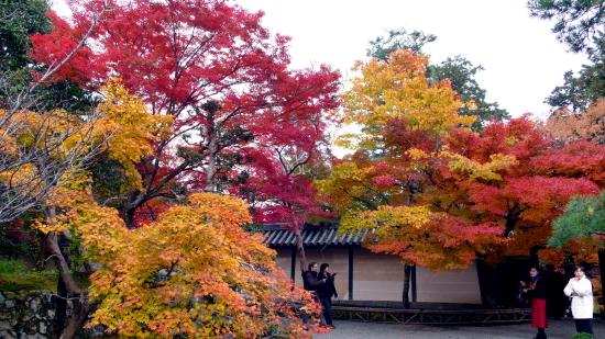 京都紅葉2006-4