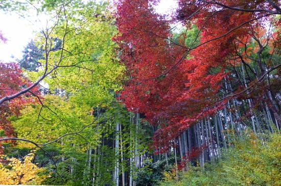 京都紅葉2006-1