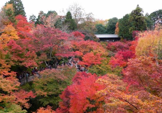 京都紅葉2006-9