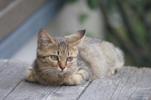外猫オス3
