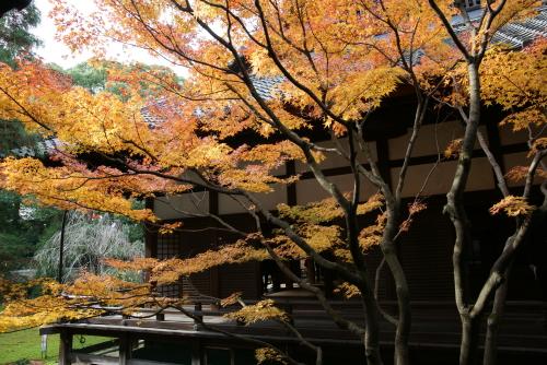 京都紅葉青蓮院4