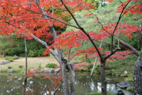 京都紅葉無鄰菴5