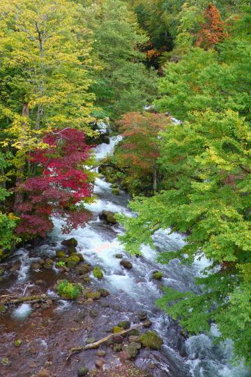 北海道紅葉2007-6