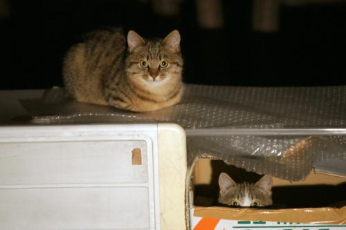 外猫3-2 (2)