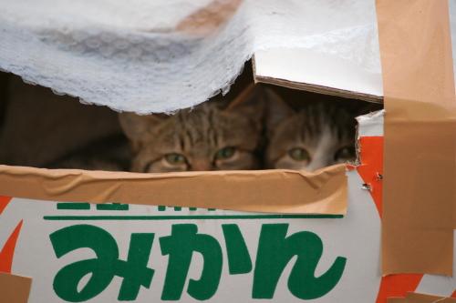外猫3-1 (2)