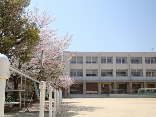 2011sakura5