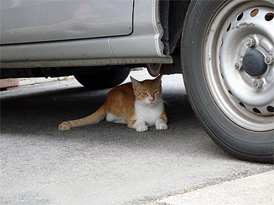 境港の猫1