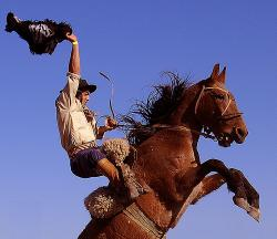 horse-picture-brazil-a-velhaca-Eduardo-Amorim-horse.jpg
