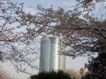 桜~六本木ヒルズ