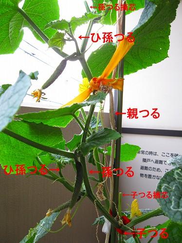 IMG_4932moji.jpg