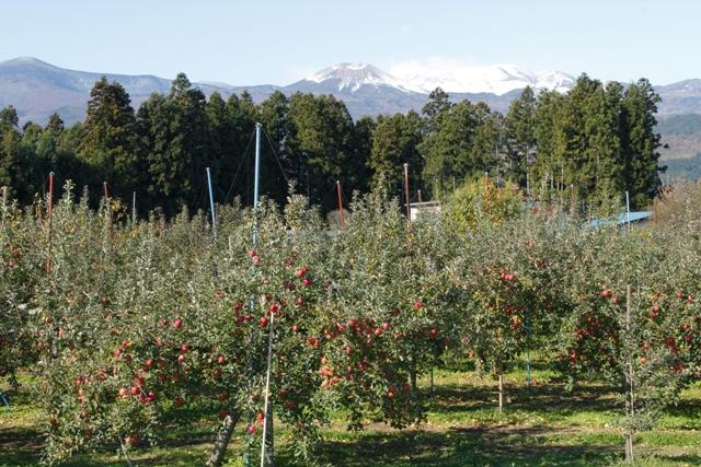 リンゴ園地