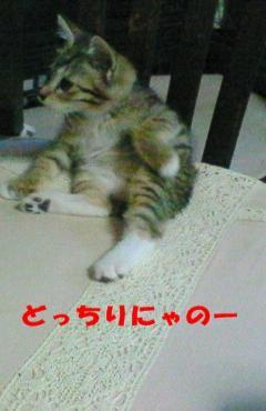 NEC_0062-1.jpg