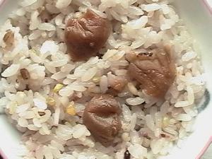 やずやの発芽十六雑穀無料試食セット