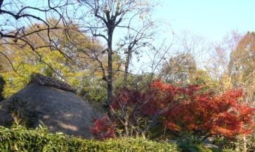 紅葉&柿&わらぶき屋根!