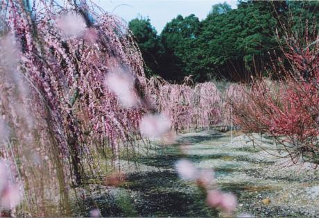 kokubu_1.jpg