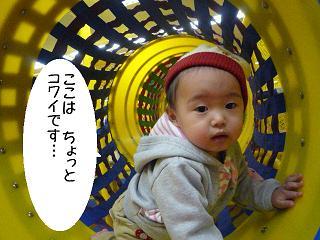 maika2201273.jpg