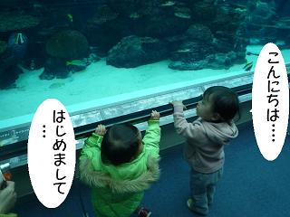 maika22031715.jpg