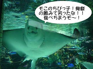 maika22031717.jpg